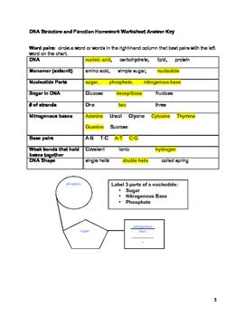 Dna Mutations Practice Worksheet Answer Key Pdf - worksheet