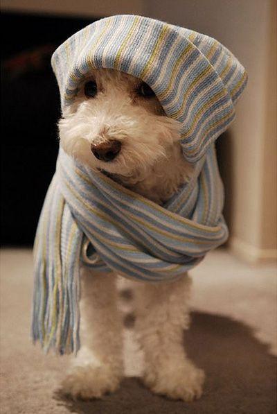 Un joli chien d'hiver! / What a beautiful winter puppy!