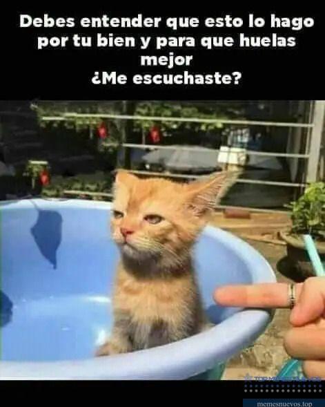 Pin En Memes Gatos Graciosos