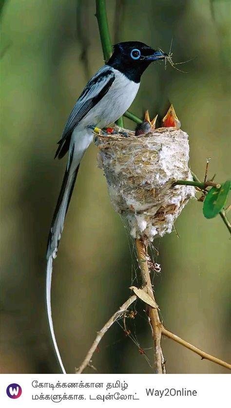 Impacientes Nidos De Aves Fotos De Aves Aves Exoticas