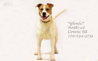 A 17glendaa038746pic2 Jpg Dogs Petsmart Dog Dog Adoption