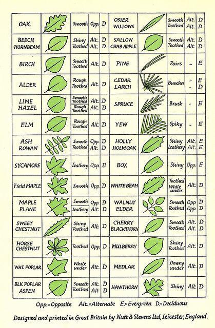 Leaf Identification Tree Leaf Identification Leaf Identification Tree Identification Chart
