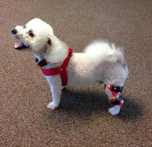 The Best Dog Knee Braces Review In 2020 Dog Braces Support