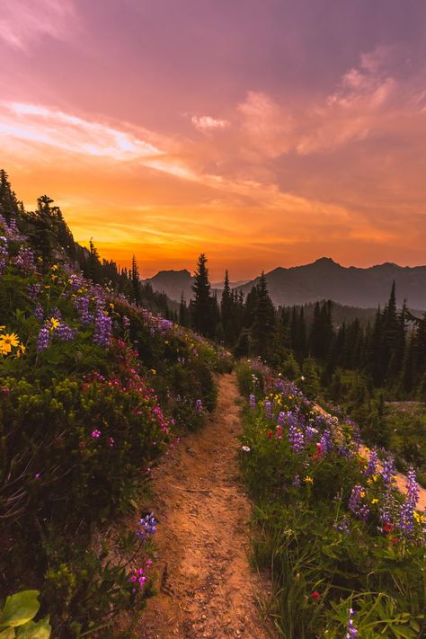 Pacific Crest Trail leading to a gorgeous burn in Mount Rainier National Park [O.-- Pacific Crest Trail leading to a gorgeous burn in Mount Rainier National Park [OC] Nature Aesthetic, Flower Aesthetic, Travel Aesthetic, Aesthetic Backgrounds, Aesthetic Wallpapers, Pacific Crest Trail Oregon, Pacific Coast, Oregon Trail, Mount Rainier National Park