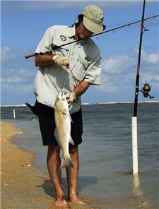 Saltwater Surf Fishing Basics | Fishing | Fish, Fishing tips