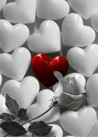 مما أعجبنى في مرحلة ما من عمرك ستعرف إن الإحترام أهم من الحب وأن التفاهم أهم من التناسب والثق Love Heart Images Heart Wallpaper Beautiful Heart Images