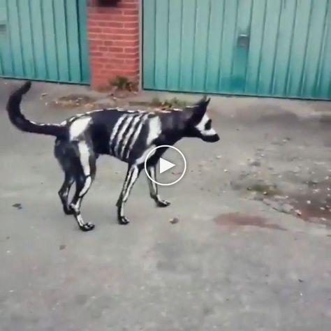 spooky boy #funnyanimals #funnyanimalvideos #animalvideos
