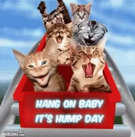 Happy Wednesday Hump Day GIF - HappyWednesday HumpDay - Discover & Share GIFs