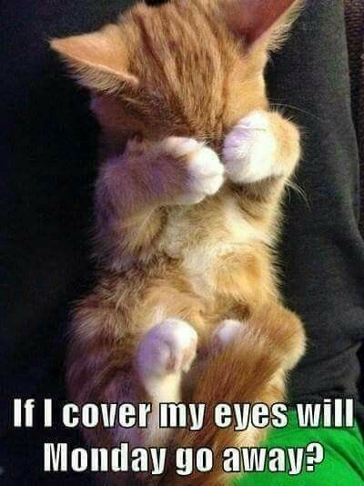 Cute Kitten Pictures With Sayings : kitten, pictures, sayings, Cutie, Can't, Shake, Monday, Blues!, #cuteanimals, #kittens, #pets, Animals,