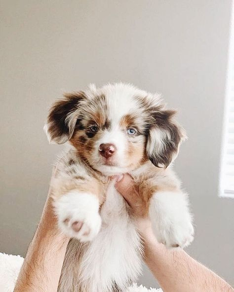 Super Cute Puppies, Baby Animals Super Cute, Cute Baby Dogs, Cute Little Puppies, Cute Dogs And Puppies, Cute Little Animals, Cute Funny Animals, Doggies, Babies With Dogs