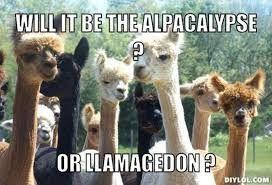 Image Result For Funny Llama Memes More Llama Jokes Funny Llama Funny Animal Memes