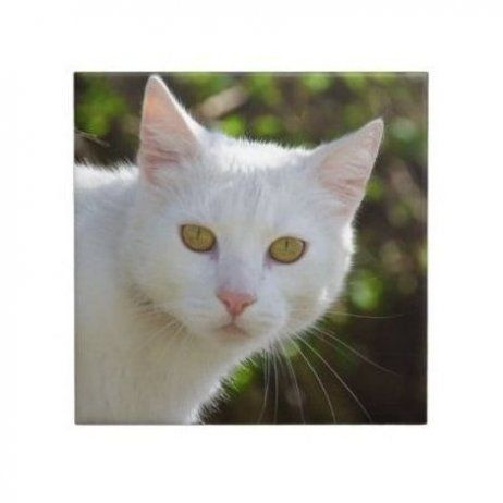 White Cat With Yellow Eyes Ceramic Tile In 2020 Cat With Blue Eyes Yellow Cat White Cats