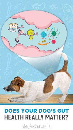 5 Steps To Restore Gut Health Gut Health Health Your Dog
