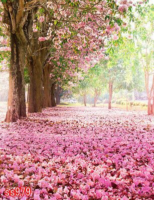 Find many great new & used options and get the best deals for Cherry blossoms SPRING OUTDOOR 5x7 FT CP  PHOTO SCENIC BACKGROUND BACKDROP ss979 at the best online prices at eBay! Free shipping for many products!