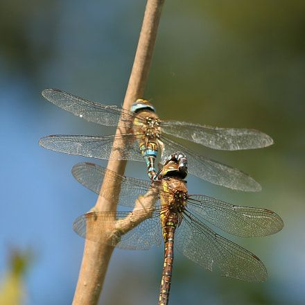 Dragonfly dating site