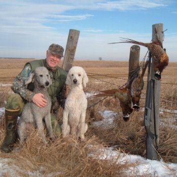 Poodle Standard Poodle Hunting Poodle Retrievers Dog Breeds