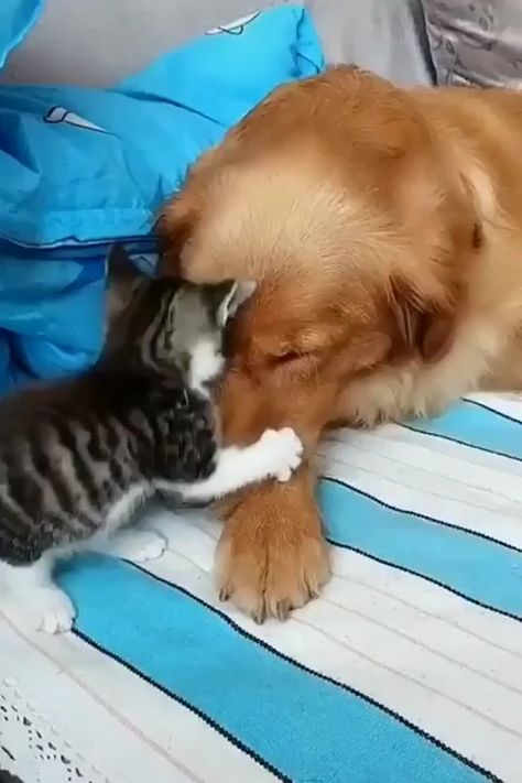 Play with me 🐈