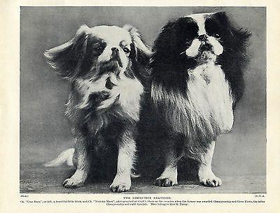 JAPANESE CHIN LOVELY VINTAGE STYLE DOG ART PRINT POSTER