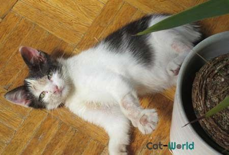 How To Treat Ringworm In Cats Http Pets Ok Com How To Treat