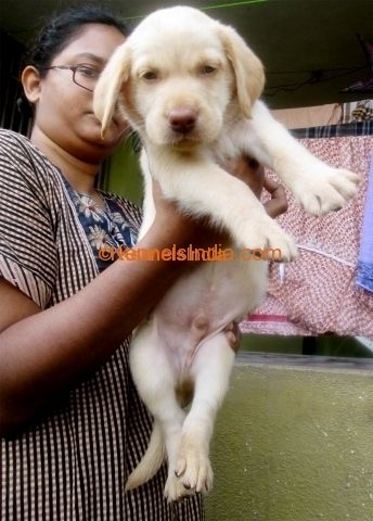Cute Puppies For Sale In Chennai In 2020 Puppies For Sale