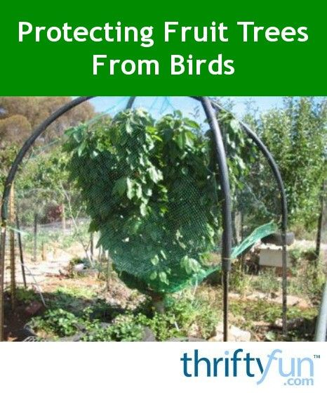Protecting Fruit Trees From Birds