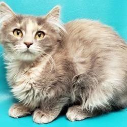 Pet Card With Images Cat Adoption Cats Pets