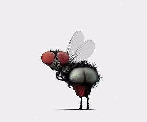 Из насекомых уважаю самку богомола! Молодец баба! Полюбила. Убила. Забыла.