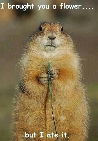 The Best Ways to Rid Your Yard of Groundhogs   Funny ...