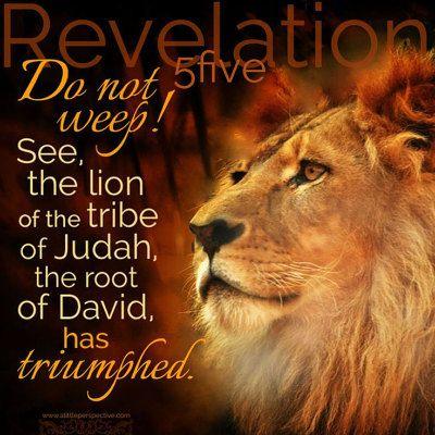 Judah has triumphed! | Scripture pictures, Lion of judah, Tribe of judah