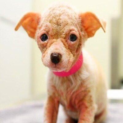 Watch Hairless Alien Puppy Grow Up To Be The Cutest Dog Fluffy