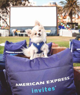 Dog Friendly American Express Openair Cinemas Pyrmont Australian