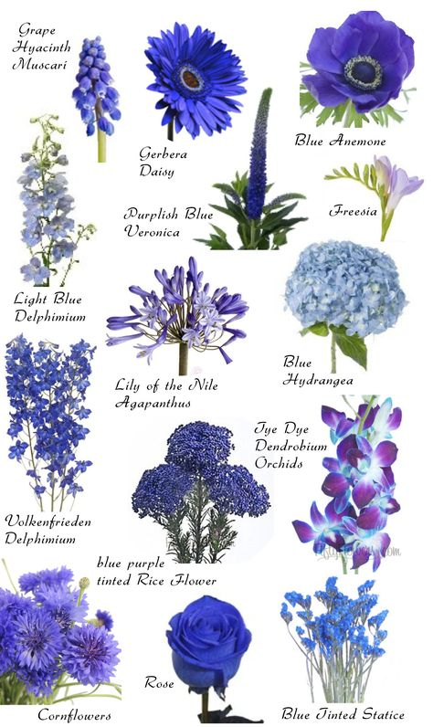 "Blue blooms More Have you ever found a picture of a bouquet and wondered, ""What is that flower?"" Here is a collection of flower names sorted by color. A few bouquet examples are at the bottom and so… Arrangements Ikebana, Floral Arrangements, Blue Wedding Flower Arrangements, Deco Floral, Arte Floral, Floral Design, Blue Wedding Flowers, Beautiful Flowers, Wedding Blue"