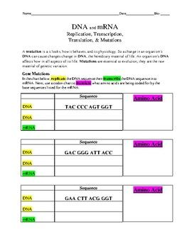 Dna Replication Transcription And Translation Practice