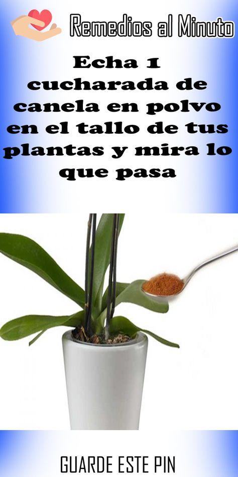 58 Ideas De Plagas Y Enfermedades Plagas Cuidado De Plantas Jardineria Y Plantas