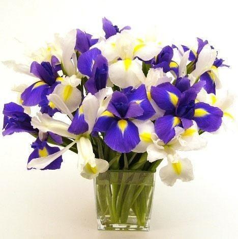 Mazzo Di Fiori Iris.Pin Di La Figlia Dei Fiori Su Fiori In Vaso Vasi Da Fiori