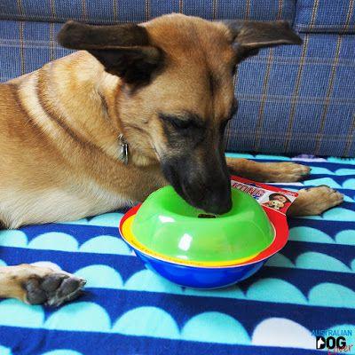 Kong Tiltz Treat Dispenser Review Australian Dog Lover