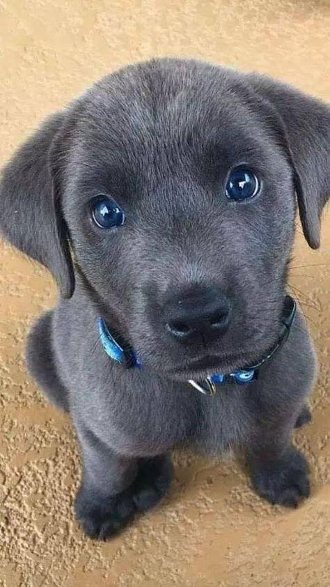 65 bébés animaux qui remplissent votre coeur de joie ... - WİLDE TİERE - ...   - Sweet Dogs - #animaux #bebes #coeur #dogs #joie #qui #remplissent #Sweet #Tiere #votre #WİLDE
