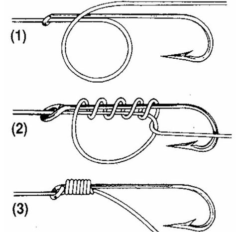What is the better model? Example 1 Example is the better model? Example 1 Example 2 What is the better model? Fishing Rigs, Carp Fishing, Trout Fishing, Saltwater Fishing, Ice Fishing, Snell Knot, Fishing Line Knots, Strong Knots, Survival Knots