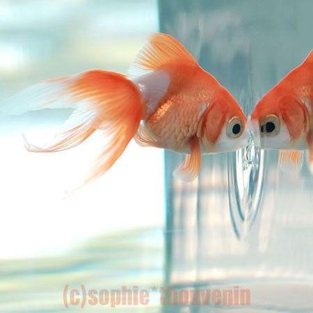 fishykiss