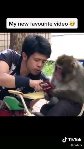 Me My Best Friend Stalking My Crush Profile In Front Him Animals Monkey Bff Tiktok Video Funny Laugh Funny Texts Funny