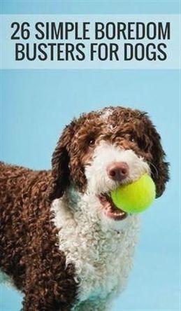 Dog Training Madison Wi Dog Training Unleashed Dog Training
