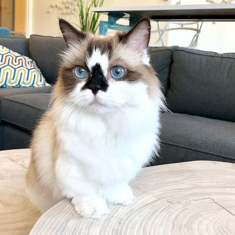 Introducing the newest member of our #WayfairPetSquad, @albertbabycat 😻 Follow Albert the baby-faced cat to stay up to date on his favorite Wayfair pieces! (Because what the cat says, goes.)