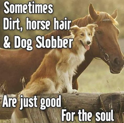 Sometimes dirt, horse hair and dog slobber are just good for the soul. - Sometimes dirt, horse hair and dog slobber are just good for the soul. Funny Horses, Funny Animals, Cute Animals, Funny Horse Sayings, Animal Quotes, Dog Quotes, Farm Quotes, Family Quotes, Animal Memes