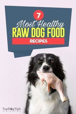 7 Best Raw Dog Food Recipes Great For Beginners Of Raw Feeding