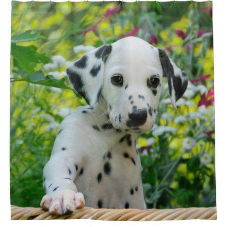 Cute Young Dalmatian Dog Puppy Tub Shower Curtain Zazzle Com
