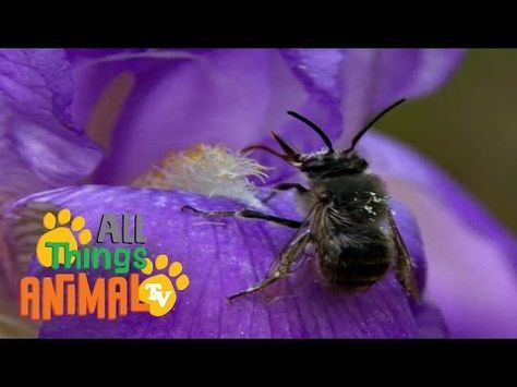 BEES | Animals for children. Kids videos. Kindergarten | Preschool learning - YouTube