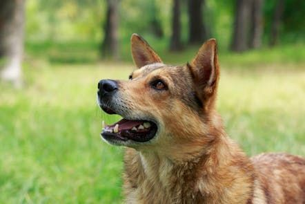 Jaw Chattering in Dogs - Definition, Cause, Solution, Prevention, Cost |  Dogs, Dog ages, Dogs, puppies