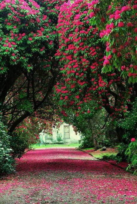Account Suspended Beautiful Gardens Beautiful Landscapes Gorgeous Gardens
