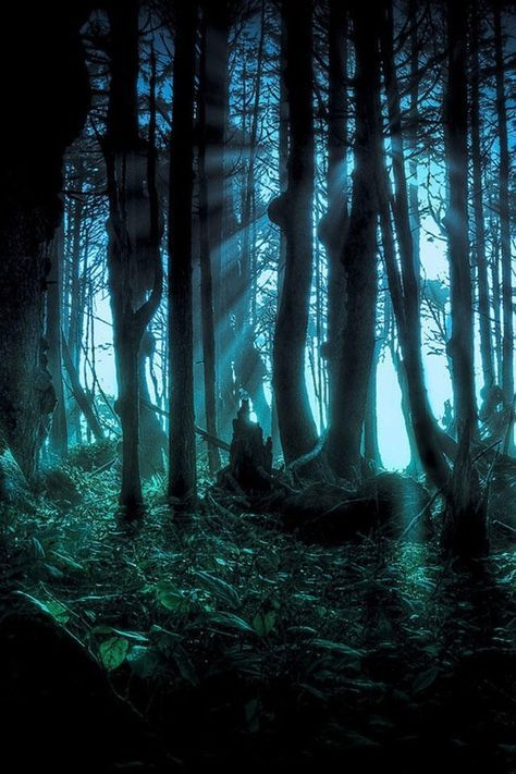 Awesome Forest Forest Wallpaper Halloween Wallpaper Night Forest