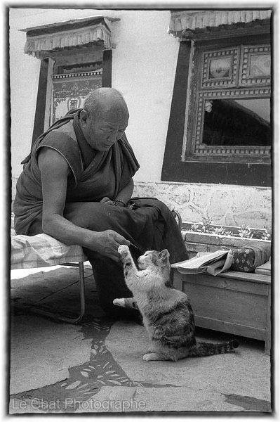 Moine Tibétain jouant avec son chat | Chats du Tibet | Pinterest | Tibet